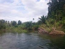 Grüne Dickichte in den Dschungeln von Thailand in Phuket an einem vollen Tag stockfoto