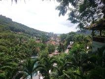 Grüne Dickichte in den Dschungeln von Thailand in Phuket an einem vollen Tag stockbilder