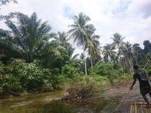 Grüne Dickichte in den Dschungeln von Thailand in Phuket an einem vollen Tag lizenzfreie stockbilder