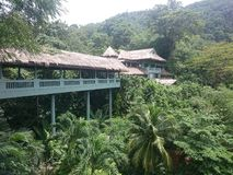 Grüne Dickichte in den Dschungeln von Thailand in Phuket an einem vollen Tag lizenzfreies stockfoto