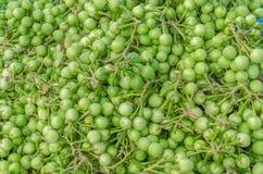Grüne die Türkei-Beere lizenzfreie stockbilder