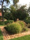 Grüne Ecke im schönen Garten Stockfotografie