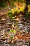 Grüne Efeuanlage stockfotografie
