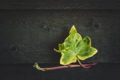 Grüne Efeuanlage, die über einen Gartenzaun kriecht Lizenzfreie Stockfotos