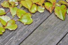 Grüne Efeuzweige auf hölzernen Brettern Lizenzfreie Stockfotografie