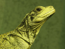 Grüne Eidechse Lizenzfreie Stockfotografie