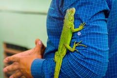 Grüne Eidechse auf Männer ` s Hand Eidechse glaubt bequem mit einem man_ lizenzfreie stockbilder