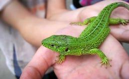Grüne Eidechse in der Kinderhand Stockfotos