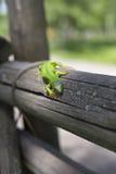 Grüne Eidechse - grüne Eidechse mit einem langen Schwanz, der auf einem Stück Holz steht Stockfotos