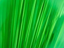 Grüne einheimische Pflanzen in der Bewegung Lizenzfreies Stockfoto