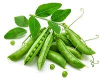 Grüne Erbse in der Hülse mit Blättern noch Lizenzfreie Stockfotografie