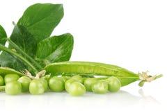 Grüne Erbse mit Blättern Lizenzfreie Stockfotos