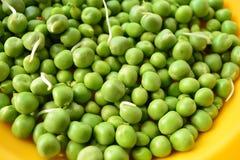 Grüne Erbsen Stockfoto