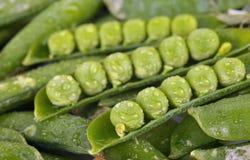 Grüne Erbsen in den Hülsen Stockbild