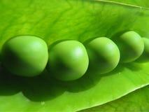 Grüne Erbsen schließen oben Stockbild