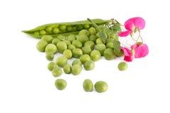 Grüne Erbsen und ein Zweig mit Blume Lizenzfreie Stockfotos