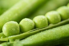 Grüne Erbsenhülse, grüne Erbsen Frische Tomaten und Zucchini Stockfotografie
