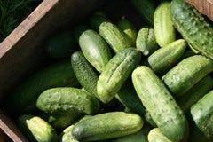 Grüne Essiggurken - frisch Stockfoto