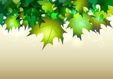 Grüne fallende Ahornblätter Stockfoto