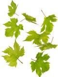 Grüne fallende Blätter Stockfoto