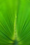 Grüne Farbe des abstrakten Hintergrundes des Palmblattes im Radialunschärfefokus Stockbilder