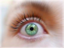 Grüne Farbe des Augenmädchens Stockfotos