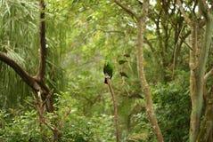 Grüne Farbe unter dichtem Grün Stockbild
