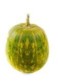 Grüne Farben des Kürbises auf weißem Hintergrund herauf Seite Stockfotos