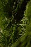 Grüne Farbsommer lässt Bäume Lizenzfreies Stockfoto