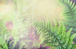 Grüne Farnblätter auf unscharfem Naturhintergrund Lizenzfreies Stockfoto
