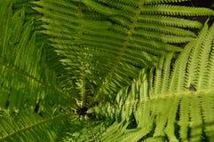 Grüne Farnblätter unter der Sonne Stockfoto