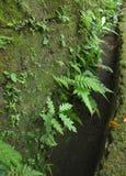 Grüne Farne auf alter Wand Lizenzfreies Stockfoto