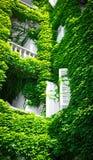 Grüne Fassade mit weißen Fensterläden Stockbild
