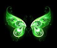 Grüne feenhafte Flügel lizenzfreie abbildung