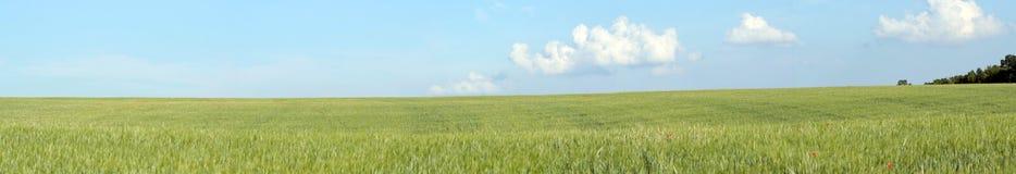 Grüne Feld Landschaft Lizenzfreie Stockbilder