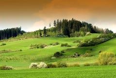 Grüne Feld- und weiden lassenschafe Stockbild