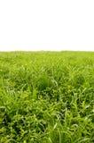 Grüne Felder Lizenzfreies Stockbild
