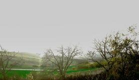 grüne Felder lizenzfreie stockbilder