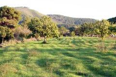 Grüne Felder stockbilder