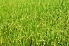 grüne Felder lizenzfreie stockfotos
