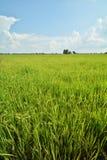 grüne Felder stockfoto