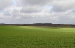 Grüne Felder stockfotos