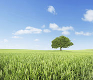 grüne Felder Stockbild