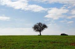 Grüne Felder, blauer Himmel, einsamer Baum Stockfoto