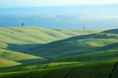 Grüne Felder des Weizens Stockfotos