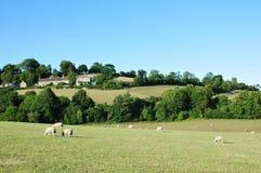 Grüne Felder mit einem blauen Himmel oben Stockfotos