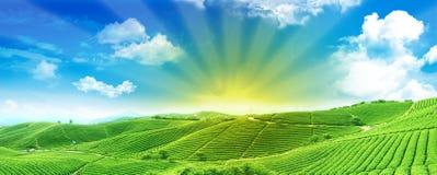 Grüne Felder am Sonnenaufgang Stockbilder