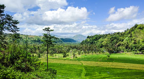 Grüne Felder und blaue Himmel Lizenzfreies Stockbild