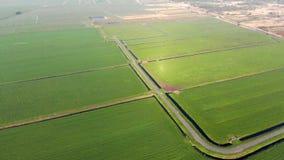 Grüne Felder und Kanäle für das Weiden lassen in den Niederlanden stock video