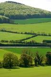 Grüne Felder von Irland Stockfotos